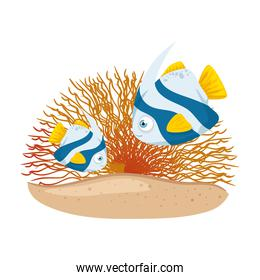 sea underwater life, cute fishes with coral on white background