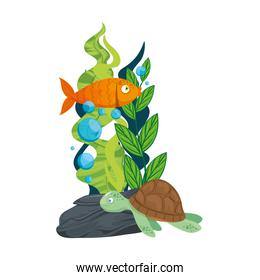 sea underwater life, tortoise and fish with seaweed on white background