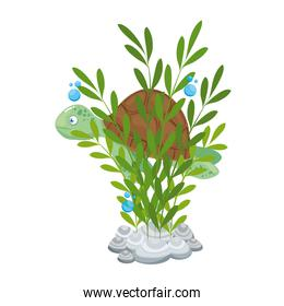 sea underwater life, tortoise with seaweed on white background