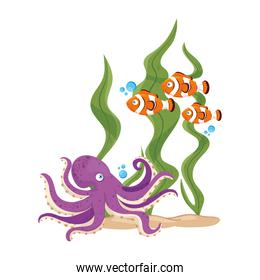 sea underwater life, fishes and octopus with seaweed on white background