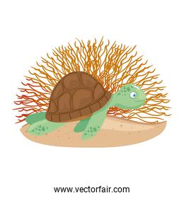 sea underwater life, tortoise with coral on white background