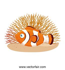 sea underwater life, anemone fish with coral, clownfish on white background
