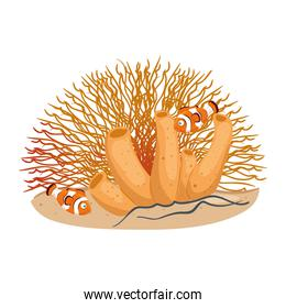 sea underwater life, anemone fishes with coral, clownfish animals on white background