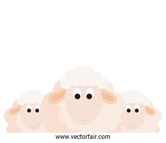 cute sheeps animals on white background