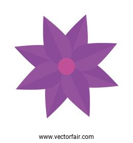flower purple color, spring concept on white background