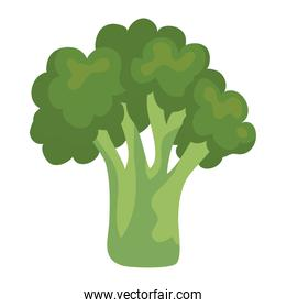 Isolated broccoli vegetable vector design