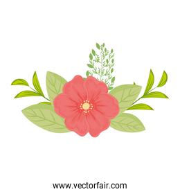 red flower with leaves vector design