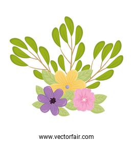 purple yellow and pink flower with leaves vector design