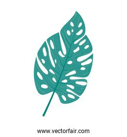 tropical nature leave on white background