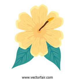 hibiscus beautiful yellow color, with tropical leaves, spring summer botanical