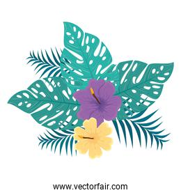decoration of hibiscus yellow and purple color, with tropical leaves, spring summer botanical