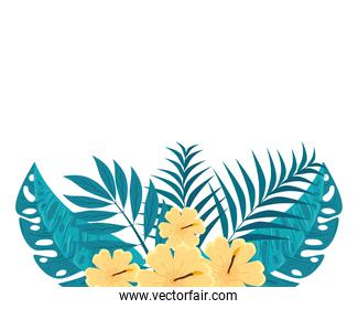 hibiscus decoration beautiful yellow color, with branches and tropical leaves, spring summer botanical