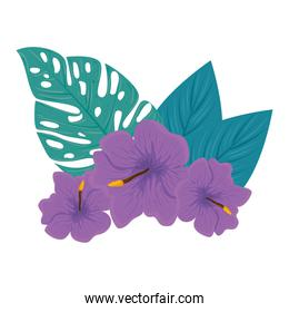 decoration of hibiscus beautiful purple color, with tropical leaves, spring summer botanical