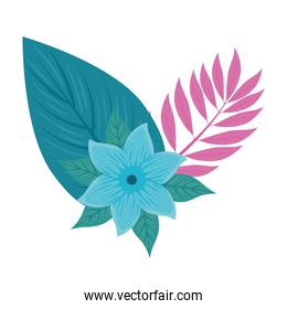 flower blue color, with branch and tropical leaves on white background