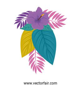 hibiscus beautiful purple color, with branches and tropical leaves, spring summer botanical