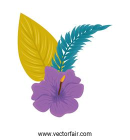 hibiscus beautiful purple color, with branch and tropical leaves, spring summer botanical