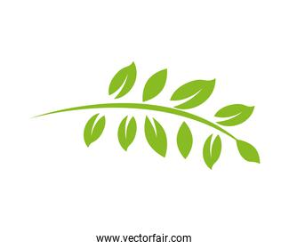 leafs plants organic product icon
