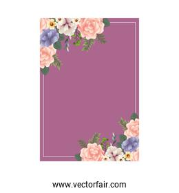 beautiful flowers and leafs decoraive frame with purple background