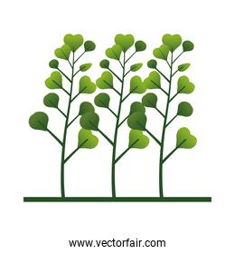 branches with leafs plant nature icon