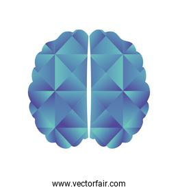 two hemispheres of the brain on a white background
