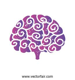 the human brain on white background