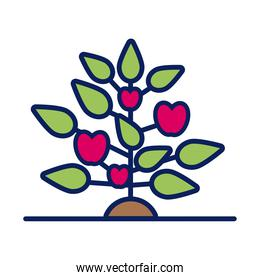 growth plant with apples line and fill style icon