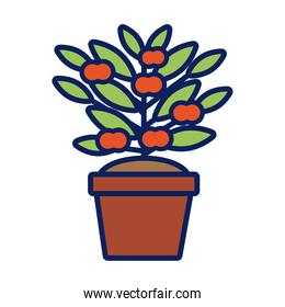 growth plant with apples in ceramic pot line and fill style icon