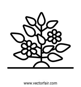 flowers growth plant line style icon