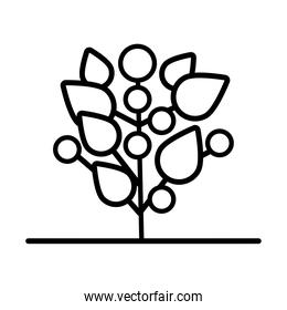 growth of the sown plant with seeds line style icon