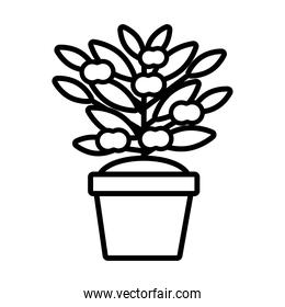growth plant with apples in ceramic pot line style icon