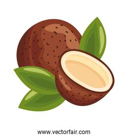 coconut fresh delicious fruit detailed style icon