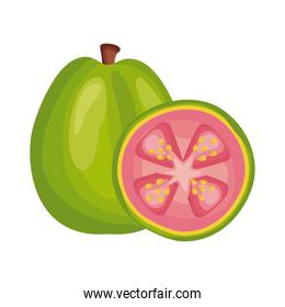 guava fresh delicious fruit detailed style icon