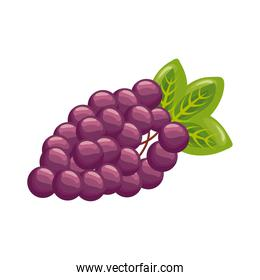 grapes fresh delicious fruit detailed style icon