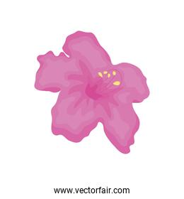 pink hibiscus flower icon, detailed style