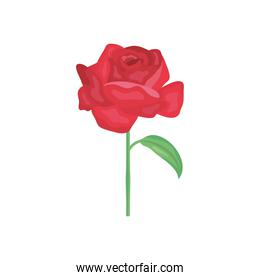 red rose icon, detailed style