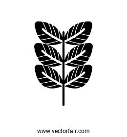 pecan leaf icon, silhouette style