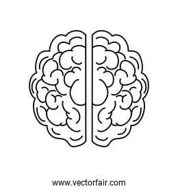 human brain icon, line style