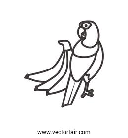 blue macaw bird and bananas line style icon vector design
