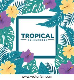 tropical background, frame of flowers purple and yellow color with tropical leaves, decoration with flowers and tropical leaves