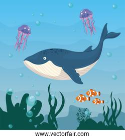 blue whale and wild marine animals in ocean, seaworld dwellers, cute underwater creatures, undersea fauna