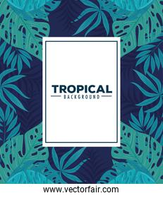 tropical background, with frame and leaves plants