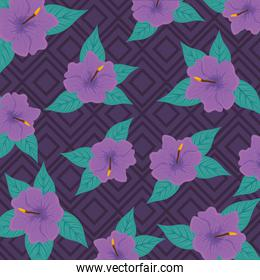 tropical background, hibiscus purple color, with tropical leaves