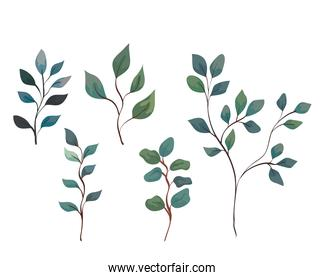 set of branches with leaves over white