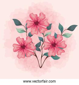 flowers pink color, branches with leaves, nature decoration