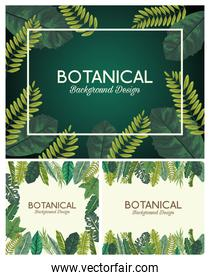 tropical leafs in frames and letterings botanical backgrounds designs