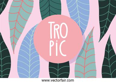 tropical leaves exotic botanical floral