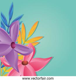 beautiful background summer flowers, template
