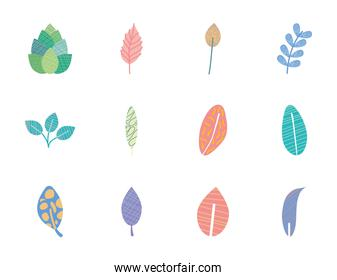 palm leaves and abstract tropical leaves icon set, flat style