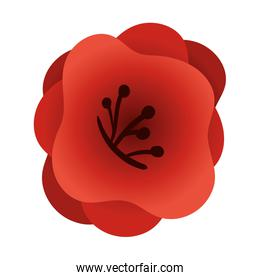Isolated chinese red flower icon vector design