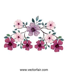 flowers purple, pink and lilac color with branches and leaves over white